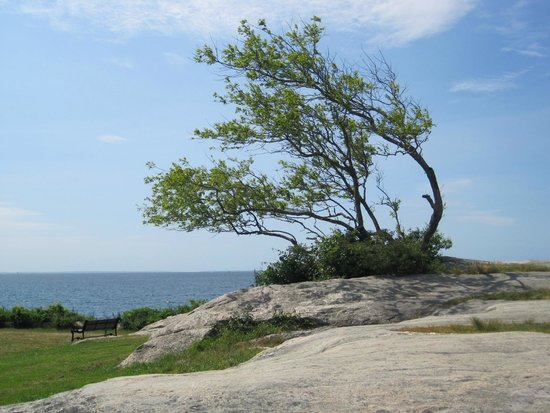 Fort Phoenix State Reservation: Tree at Fort Phoenix