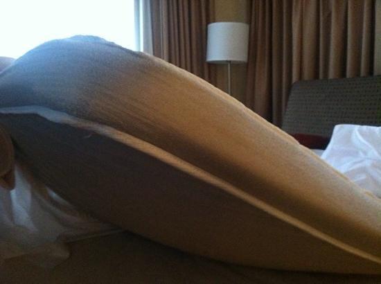 Comfort Suites Michigan Avenue / Loop : sofa bed mattress