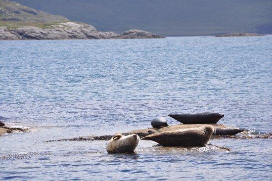Misty Isle Boat Trips: We saw so many seals!
