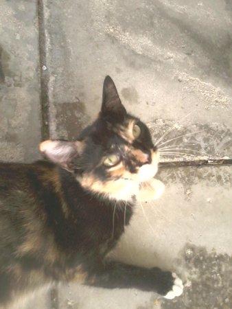Juice Paradise: guard cat