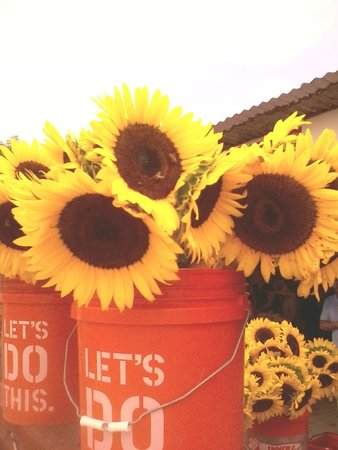 Robert is Here: sunflowers from There field