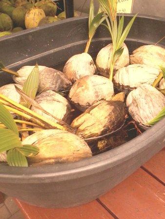 Robert is Here: coconuts