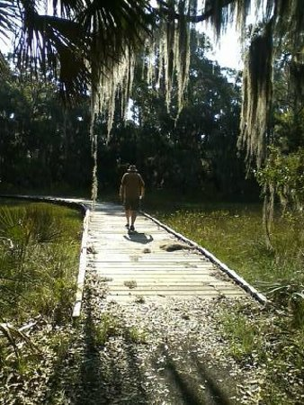 Skidaway Island State Park : Lots of spanish moss hanging from trees in the marsh.