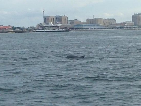 BayWatch Dolphin Tours: One of the many dolphins we saw.
