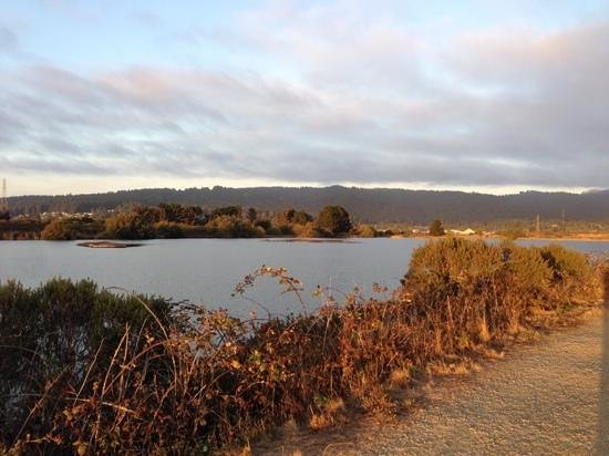 Arcata Marsh and Wildlife Sanctuary: The pond at Arcata Marsh. Will be covered with birds next month!