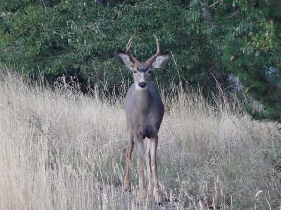 Sun Mountain Lodge: A buck outside our building