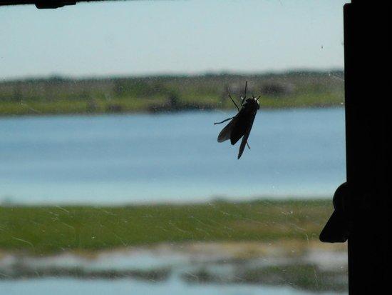 Chincoteague Natural History Association  Wildlife Tour : Gnarly Bugs!