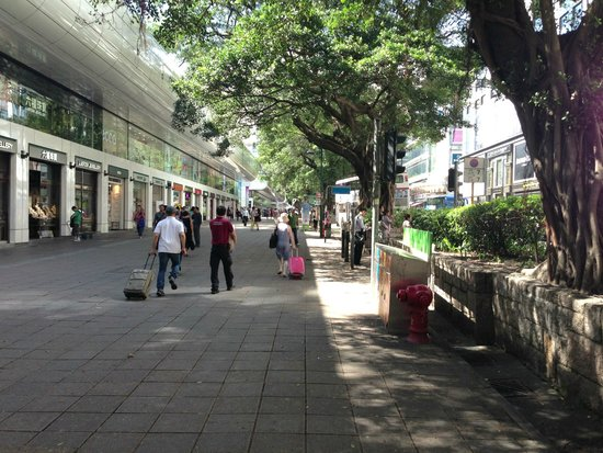Nathan Road: 街路樹がきれい