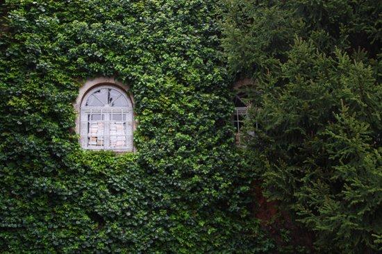 Villa d'Este: secret garden