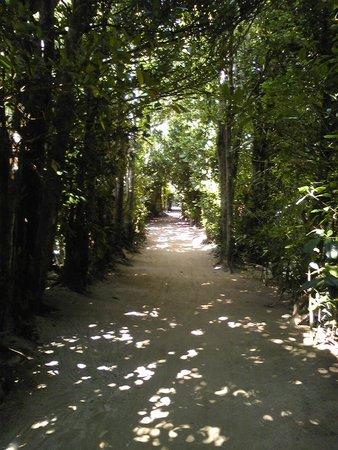 Bise Fukugi Tree Road : 木漏れ日がきれい