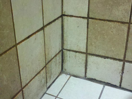 Microtel Inn & Suites by Wyndham Jasper: mold on shower walls