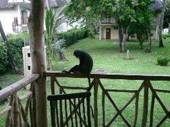Neptune Palm Beach Boutique Resort & Spa: Les visiteurs de tous les jours sur les terrasses !! gentils !!