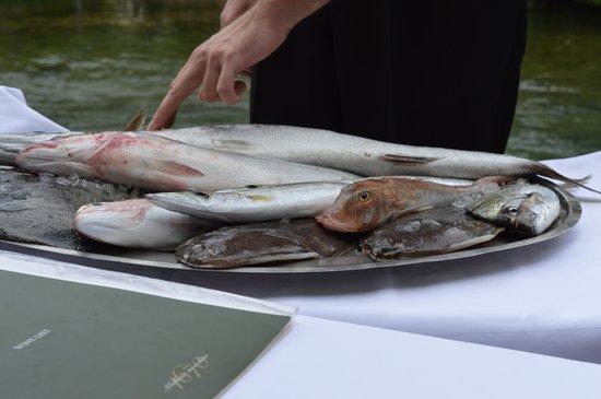 Stari Mlini Restaurant: pick your own piece of fish