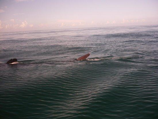 Holbox Whale Shark Tours: Tiburon Ballena