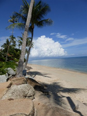 Coconut Paradise Resort: The Beach