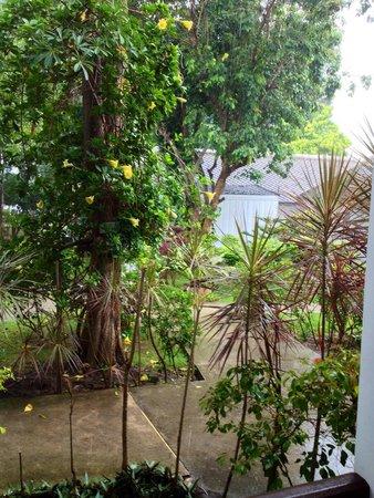 Lamai Wanta : Rainy Season ...