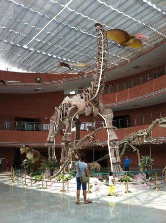 Dinosaur Fossils Museum