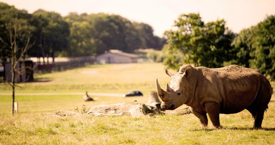 Woburn, UK : Savannah Grasslands Reserve, Road Safari