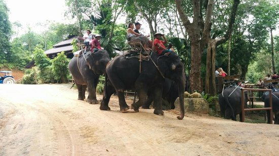 Siam Safari: Leaisurely 45 minute elphant trek