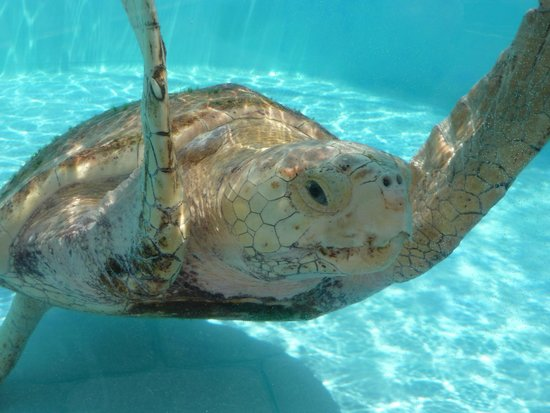 Loggerhead Marinelife Center: One of the tenants in August 2014