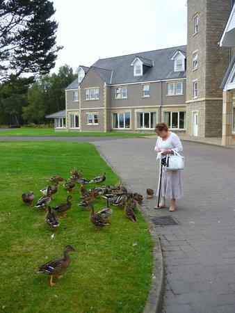 Loch Tummel Hotel: Hotel Wildlife.