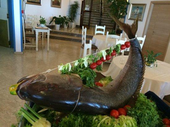 Park Hotel Terme Michelangelo: Biggest fish ever!