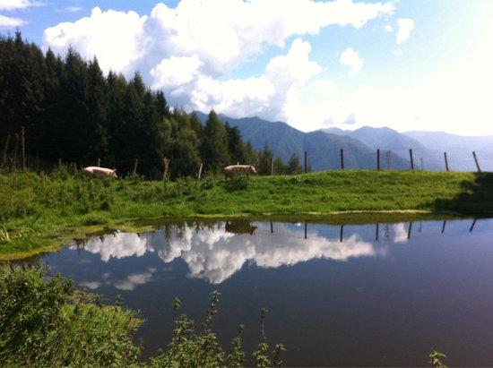 Agriturismo Alpe di Sala: Un posto magico...