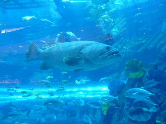 Dubai Aquarium & Underwater Zoo: vasca principale