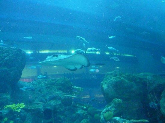 Dubai Aquarium & Underwater Zoo: all'interno del tunnel