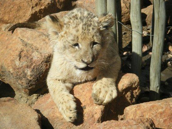 Ukutula Lion Park: My beautiful boy leigh