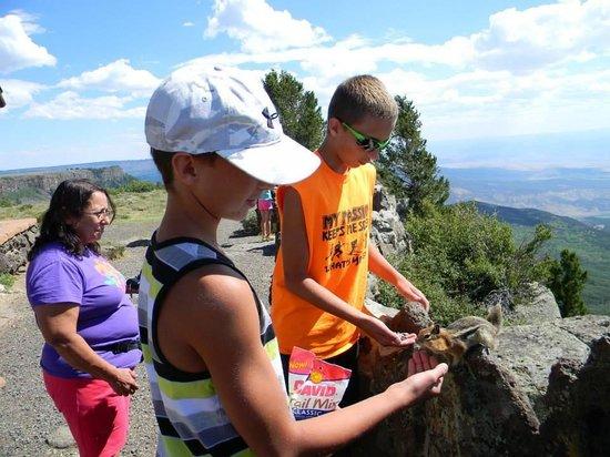 Гранд-Джанкшн, Колорадо: bring lots of sunflower seeds and peanuts