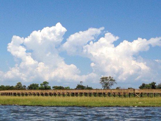 Coastal Kayak: Assateague Eco Tour