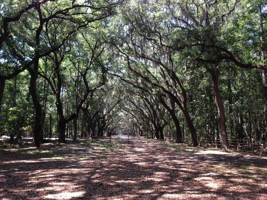 Wormsloe Historic Site: Oak avenue beyond road