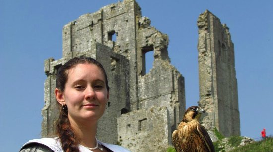 Corfe Castle: Medieval falconry at the castle
