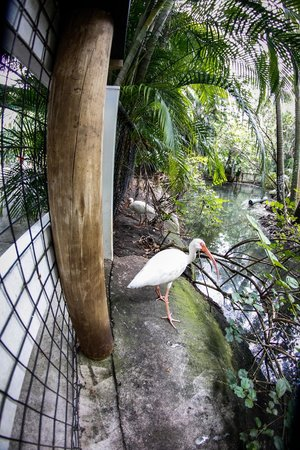 Palm Beach Zoo & Conservation Society : These guys were everywhere!