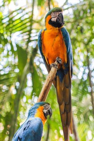 Palm Beach Zoo & Conservation Society : Gorgeous Birds