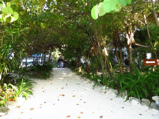Los Lirios Hotel Cabanas: Entrata