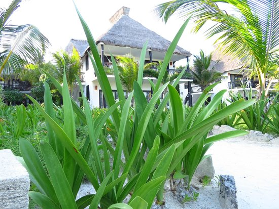 Los Lirios Hotel Cabanas: Vista Giardino verso camera