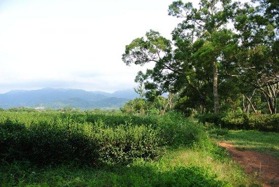 Sih Yue Syue Trail