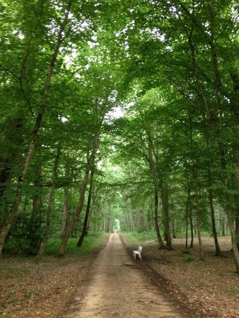 Domaine des Hauts de Loire : Walk through forrest