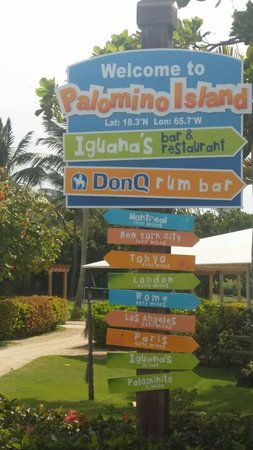 Palomino Island: Where did you come from?