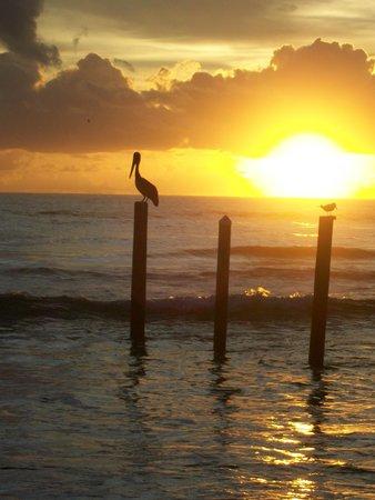 Holiday Inn Resort Daytona Beach Oceanfront: Sun rise walk