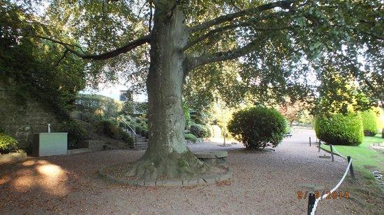Brig O Doon Hotel: Kissing tree