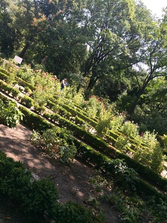 Royal Botanic Garden (Real Jardin Botanico) : Real Jardin Botanico