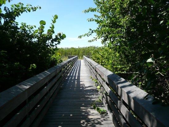 Tigertail Beach : Boardwalk 6 through mangroves