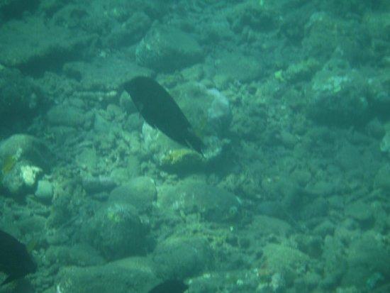 Jemeluk Beach: Underwater world