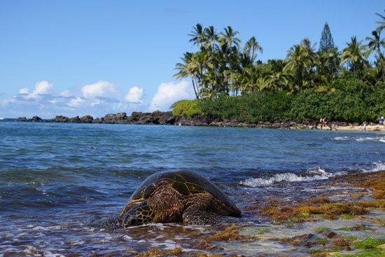 Oahu Photography Tours: Turtle beach