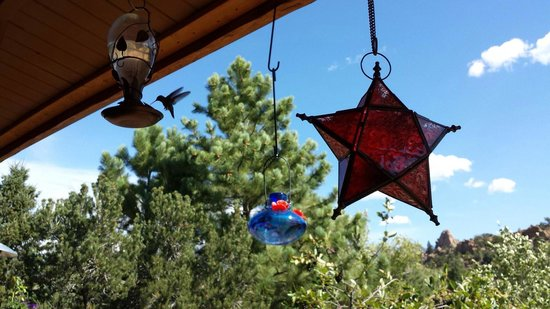 Mountain River Inn Bed & Breakfast: Catching a hummingbird relaxing on the porch while listening to the river at the Mountain River