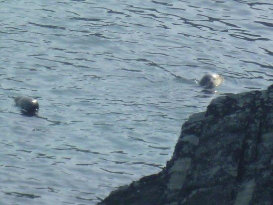 Cardigan Island Coastal Farm Park: our first seals