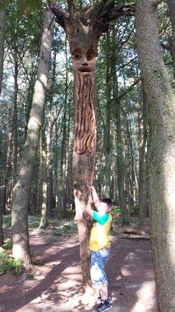 Umberslade Adventure: Tree man